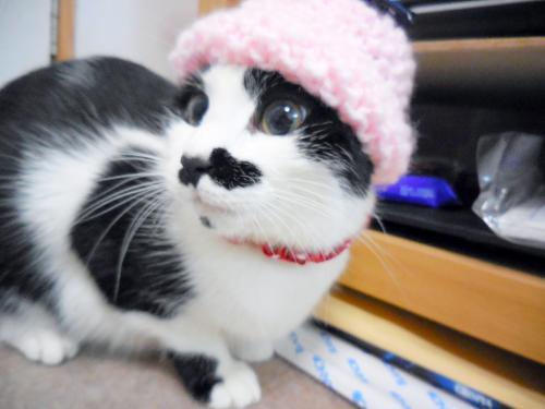 くぅミニ―帽