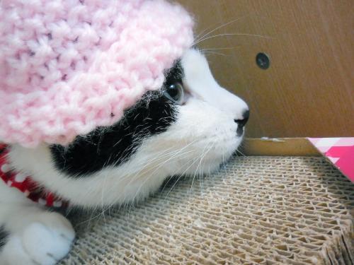 くぅミニ―帽02