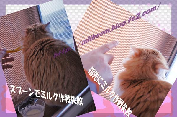 milkMission01.jpg
