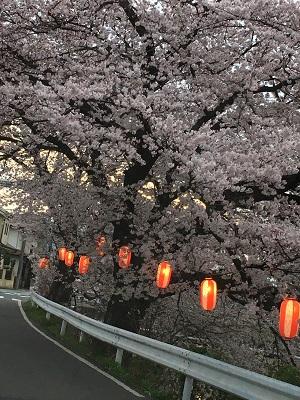 2016-0403-sakura.jpg