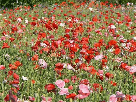 0806花