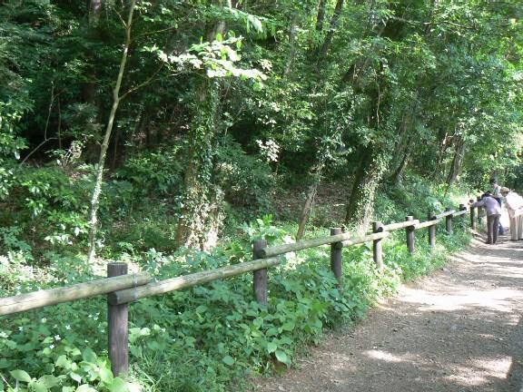 0706雑木林