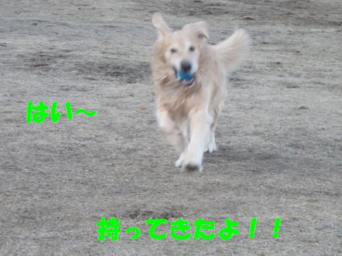 IMG_2370.jpg
