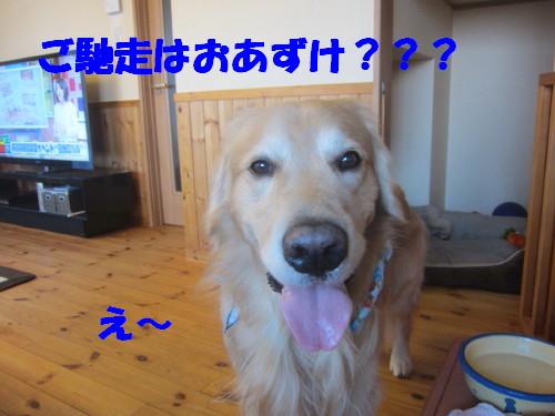 IMG_2403.jpg