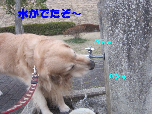 IMG_2546.jpg