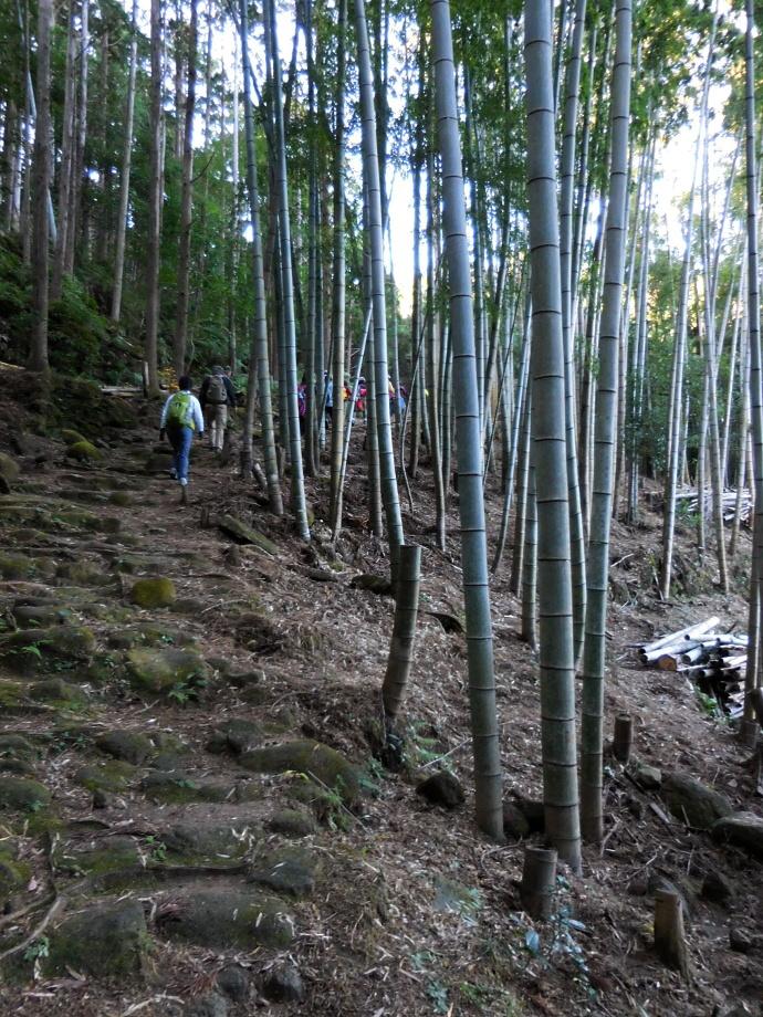151212熊野 (4)