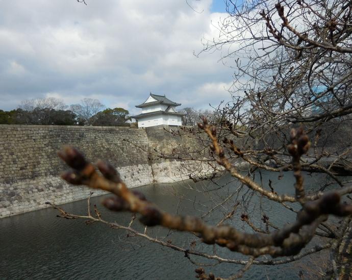 160217桜 (2)