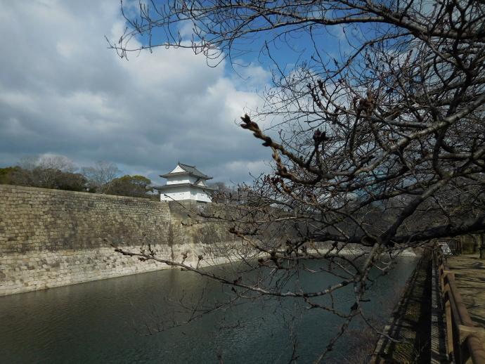 160217桜 (4)