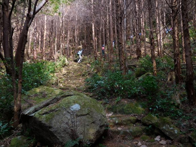 160305熊野古道 (2)