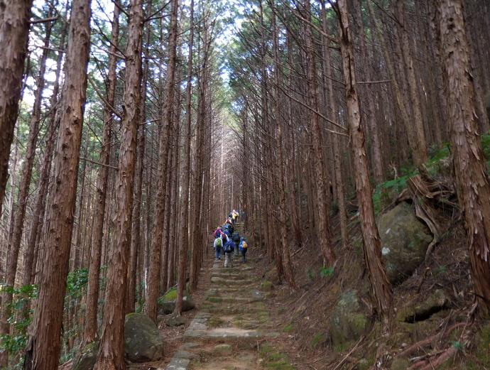 160305熊野古道 (5)