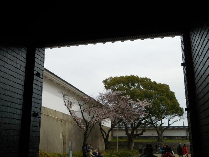 160329城桜 (1)