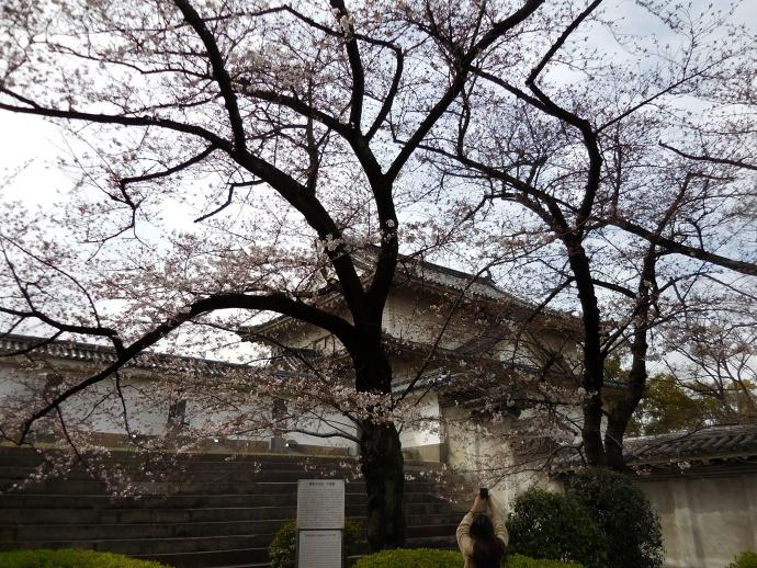 160329城桜 (2)