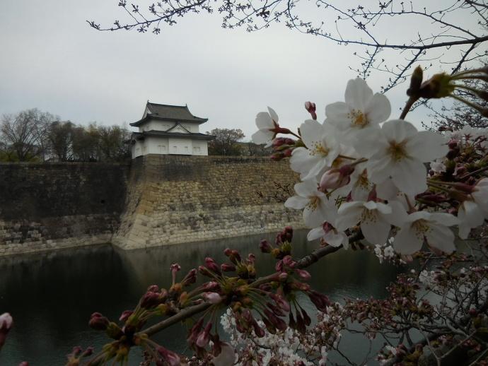 160329城桜 (3)