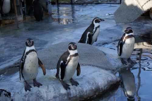15ペンギン (1200x800)