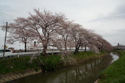 2いさぬま (1200x800)