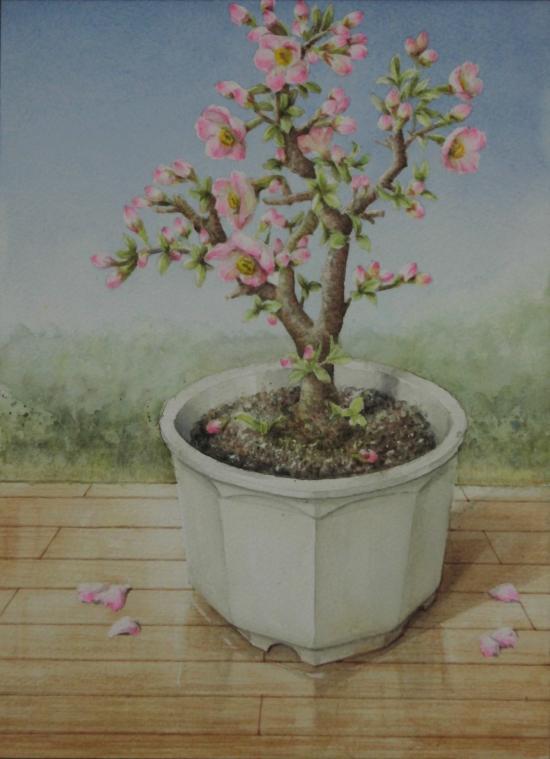 ボケの花 1603