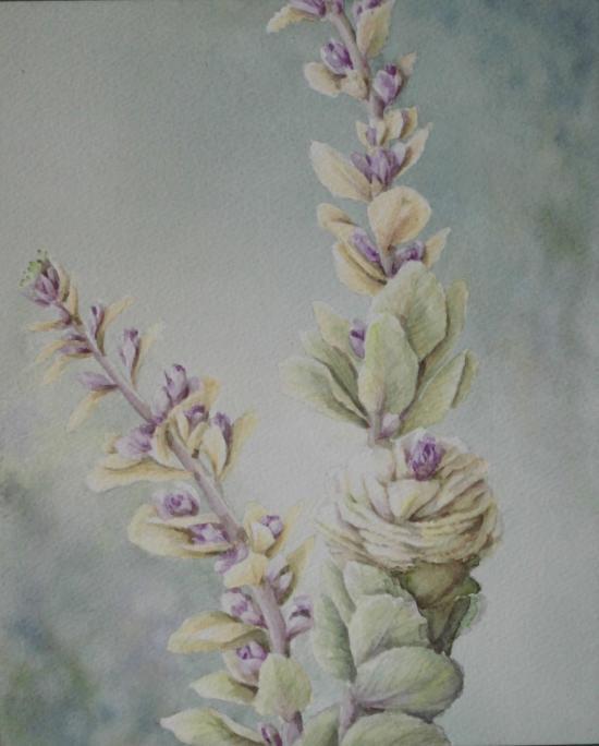 踊り葉牡丹 1603