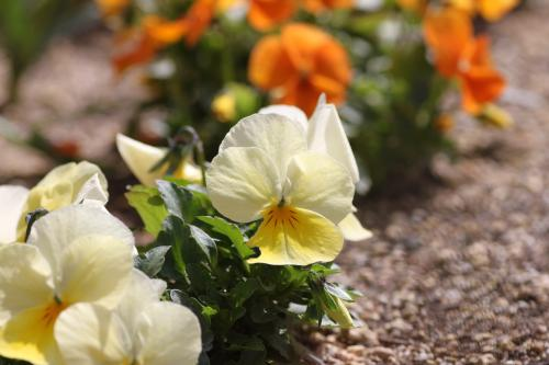 花盛り 7