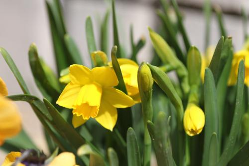 花盛り 6