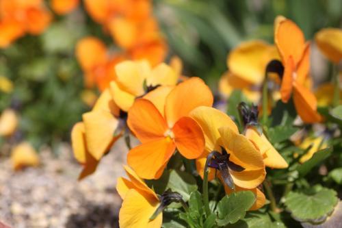花盛り 5