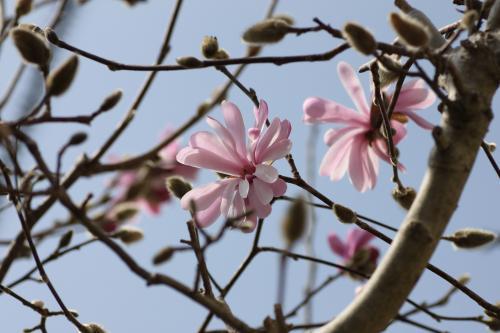 花盛り 4