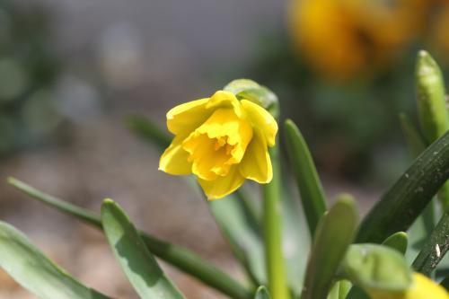 花盛り 3