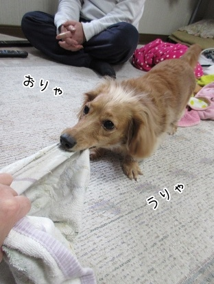 kinako4262.jpg
