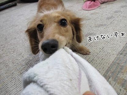kinako4263.jpg