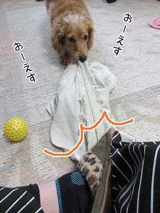 kinako4266.jpg