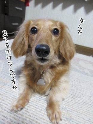 kinako4269.jpg
