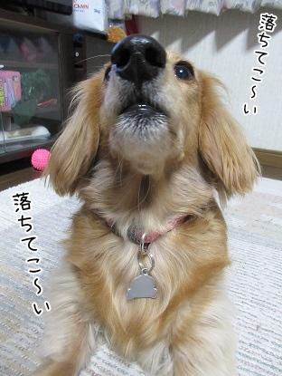 kinako4278.jpg