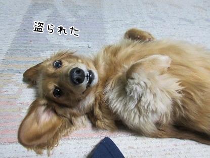 kinako4295.jpg