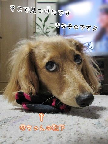 kinako4298.jpg