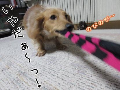 kinako4302.jpg
