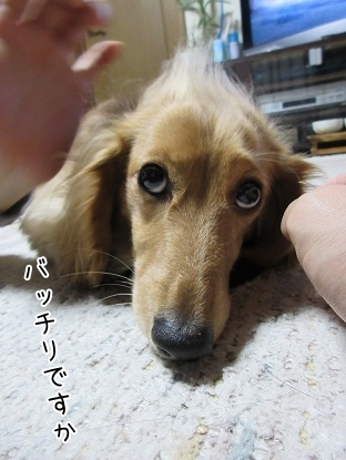 kinako4306.jpg
