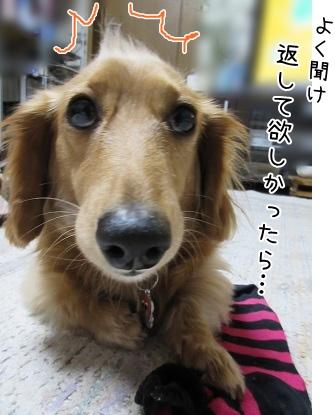 kinako4307.jpg