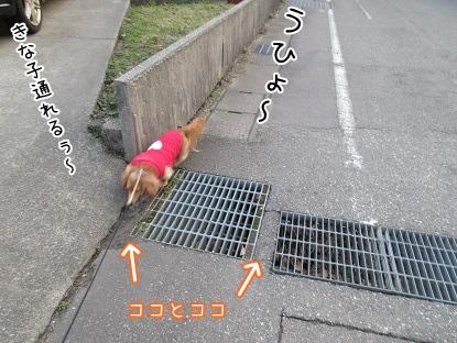 kinako4316.jpg
