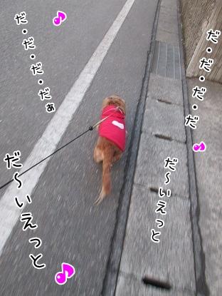 kinako4317.jpg