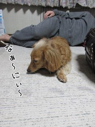 kinako4318.jpg