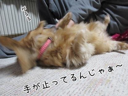 kinako4327.jpg