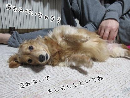 kinako4328.jpg