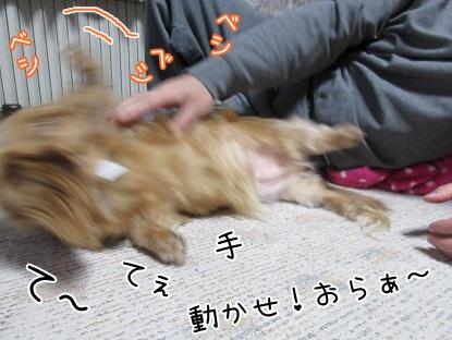 kinako4329.jpg