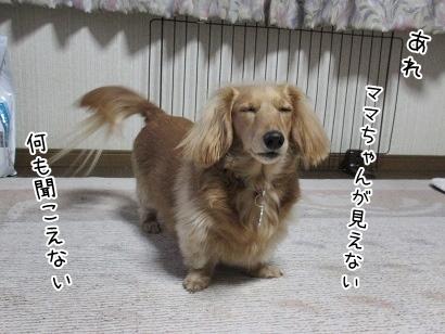 kinako4334.jpg
