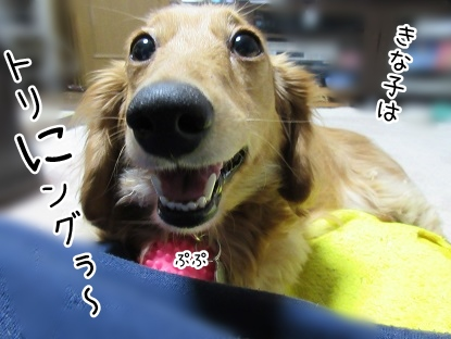 kinako4337.jpg
