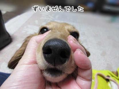 kinako4339.jpg