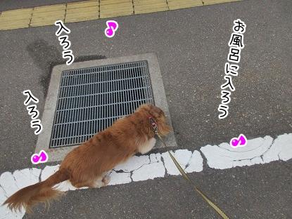 kinako4345.jpg