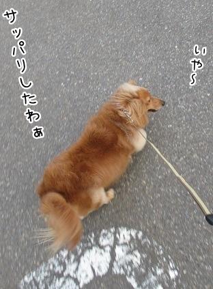 kinako4346.jpg