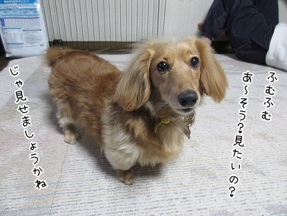 kinako4348.jpg