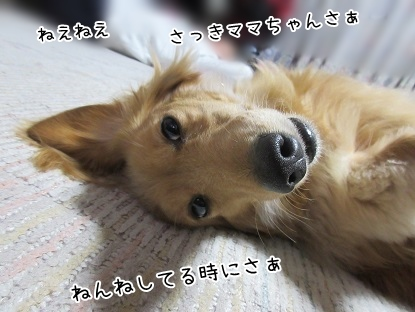 kinako4351.jpg