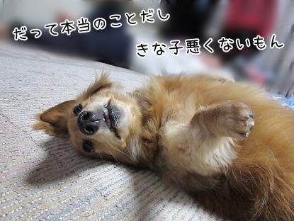 kinako4354.jpg